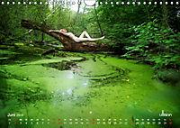 ZAUBERWALD Mystik der Natur (Wandkalender 2019 DIN A4 quer) - Produktdetailbild 6