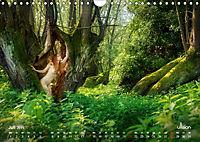 ZAUBERWALD Mystik der Natur (Wandkalender 2019 DIN A4 quer) - Produktdetailbild 7