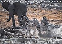 Zebras - Afrikas Wildpferde (Tischkalender 2019 DIN A5 quer) - Produktdetailbild 5