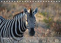 Zebras - Afrikas Wildpferde (Tischkalender 2019 DIN A5 quer) - Produktdetailbild 12
