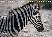 Zebras - Afrikas Wildpferde (Tischkalender 2019 DIN A5 quer) - Produktdetailbild 1