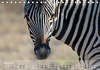 Zebras - Afrikas Wildpferde (Tischkalender 2019 DIN A5 quer) - Produktdetailbild 4