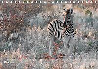Zebras - Afrikas Wildpferde (Tischkalender 2019 DIN A5 quer) - Produktdetailbild 3