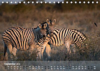 Zebras - Afrikas Wildpferde (Tischkalender 2019 DIN A5 quer) - Produktdetailbild 9