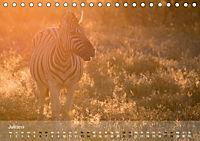 Zebras - Afrikas Wildpferde (Tischkalender 2019 DIN A5 quer) - Produktdetailbild 7