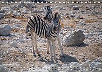Zebras - Afrikas Wildpferde (Tischkalender 2019 DIN A5 quer) - Produktdetailbild 11