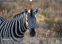 Zebras - Afrikas Wildpferde (Wandkalender 2019 DIN A3 quer) - Produktdetailbild 3