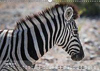 Zebras - Afrikas Wildpferde (Wandkalender 2019 DIN A3 quer) - Produktdetailbild 13