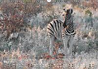 Zebras - Afrikas Wildpferde (Wandkalender 2019 DIN A3 quer) - Produktdetailbild 11