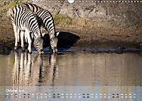 Zebras - Afrikas Wildpferde (Wandkalender 2019 DIN A3 quer) - Produktdetailbild 10