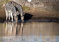Zebras - Afrikas Wildpferde (Wandkalender 2019 DIN A4 quer) - Produktdetailbild 10
