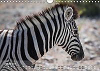 Zebras - Afrikas Wildpferde (Wandkalender 2019 DIN A4 quer) - Produktdetailbild 1