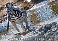 Zebras - Afrikas Wildpferde (Wandkalender 2019 DIN A4 quer) - Produktdetailbild 2