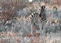 Zebras - Afrikas Wildpferde (Wandkalender 2019 DIN A4 quer) - Produktdetailbild 3
