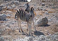 Zebras - Afrikas Wildpferde (Wandkalender 2019 DIN A4 quer) - Produktdetailbild 11