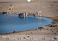 Zebras - Afrikas Wildpferde (Wandkalender 2019 DIN A4 quer) - Produktdetailbild 8