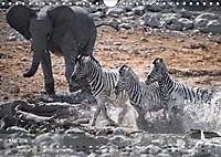 Zebras - Afrikas Wildpferde (Wandkalender 2019 DIN A4 quer) - Produktdetailbild 5
