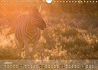 Zebras - Afrikas Wildpferde (Wandkalender 2019 DIN A4 quer) - Produktdetailbild 7
