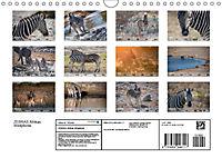 Zebras - Afrikas Wildpferde (Wandkalender 2019 DIN A4 quer) - Produktdetailbild 13