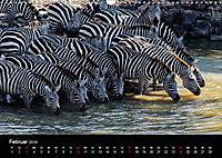 Zebras - Faszination der Streifen (Wandkalender 2019 DIN A3 quer) - Produktdetailbild 2