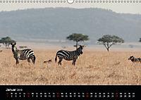 Zebras - Faszination der Streifen (Wandkalender 2019 DIN A3 quer) - Produktdetailbild 1