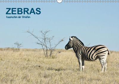Zebras - Faszination der Streifen (Wandkalender 2019 DIN A3 quer), Thomas Krebs