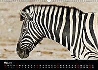 Zebras - Faszination der Streifen (Wandkalender 2019 DIN A3 quer) - Produktdetailbild 5