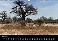 Zebras - Faszination der Streifen (Wandkalender 2019 DIN A3 quer) - Produktdetailbild 3