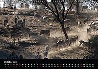 Zebras - Faszination der Streifen (Wandkalender 2019 DIN A3 quer) - Produktdetailbild 10