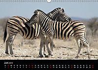 Zebras - Faszination der Streifen (Wandkalender 2019 DIN A3 quer) - Produktdetailbild 6