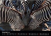 Zebras - Faszination der Streifen (Wandkalender 2019 DIN A3 quer) - Produktdetailbild 11