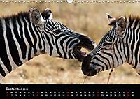Zebras - Faszination der Streifen (Wandkalender 2019 DIN A3 quer) - Produktdetailbild 9