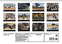 Zebras - Faszination der Streifen (Wandkalender 2019 DIN A3 quer) - Produktdetailbild 13