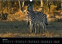 Zebras - Faszination der Streifen (Wandkalender 2019 DIN A3 quer) - Produktdetailbild 7