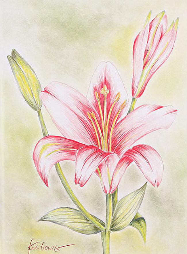 Zeichnen Basics Blumen Und Bluten Buch Bei Weltbild At Bestellen