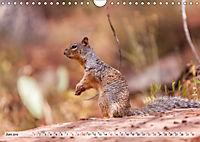 Zion Nationalpark (Wandkalender 2019 DIN A4 quer) - Produktdetailbild 6