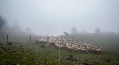 Zug der Schafe - Susana Girón |