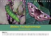 Zwei Leben, Raupe und Schmetterling (Tischkalender 2019 DIN A5 quer) - Produktdetailbild 3