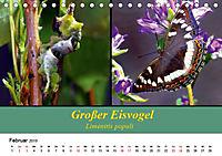 Zwei Leben, Raupe und Schmetterling (Tischkalender 2019 DIN A5 quer) - Produktdetailbild 2