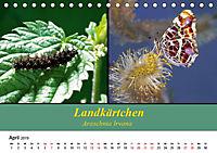 Zwei Leben, Raupe und Schmetterling (Tischkalender 2019 DIN A5 quer) - Produktdetailbild 4