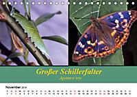 Zwei Leben, Raupe und Schmetterling (Tischkalender 2019 DIN A5 quer) - Produktdetailbild 11