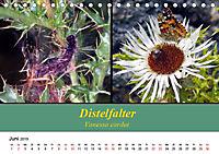 Zwei Leben, Raupe und Schmetterling (Tischkalender 2019 DIN A5 quer) - Produktdetailbild 6