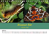 Zwei Leben, Raupe und Schmetterling (Tischkalender 2019 DIN A5 quer) - Produktdetailbild 7