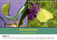 Zwei Leben, Raupe und Schmetterling (Tischkalender 2019 DIN A5 quer) - Produktdetailbild 10