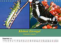 Zwei Leben, Raupe und Schmetterling (Wandkalender 2019 DIN A4 quer) - Produktdetailbild 12