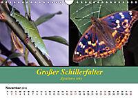 Zwei Leben, Raupe und Schmetterling (Wandkalender 2019 DIN A4 quer) - Produktdetailbild 11