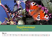 Zwei Leben, Raupe und Schmetterling (Wandkalender 2019 DIN A2 quer) - Produktdetailbild 5