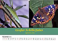 Zwei Leben, Raupe und Schmetterling (Wandkalender 2019 DIN A2 quer) - Produktdetailbild 11