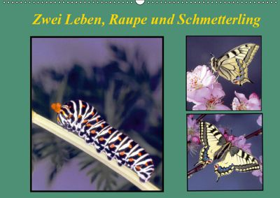 Zwei Leben, Raupe und Schmetterling (Wandkalender 2019 DIN A2 quer), Lothar Reupert