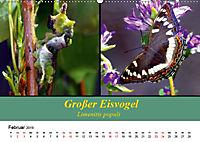 Zwei Leben, Raupe und Schmetterling (Wandkalender 2019 DIN A2 quer) - Produktdetailbild 2